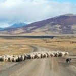 Argentina – Chile med Patagonien