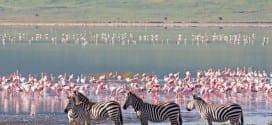 Safari i Tanzania 6 dagar + Zanzibar
