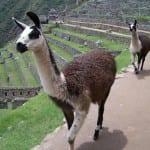 Klassiska Peru